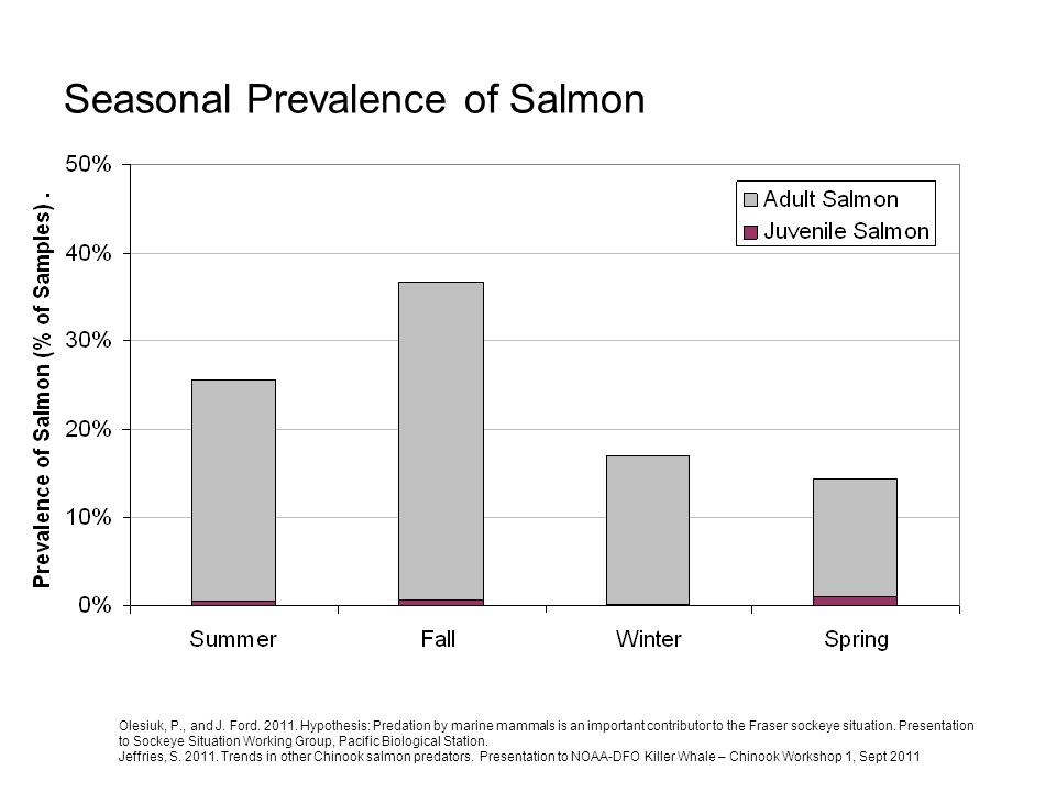 Seasonal Prevalence of Salmon