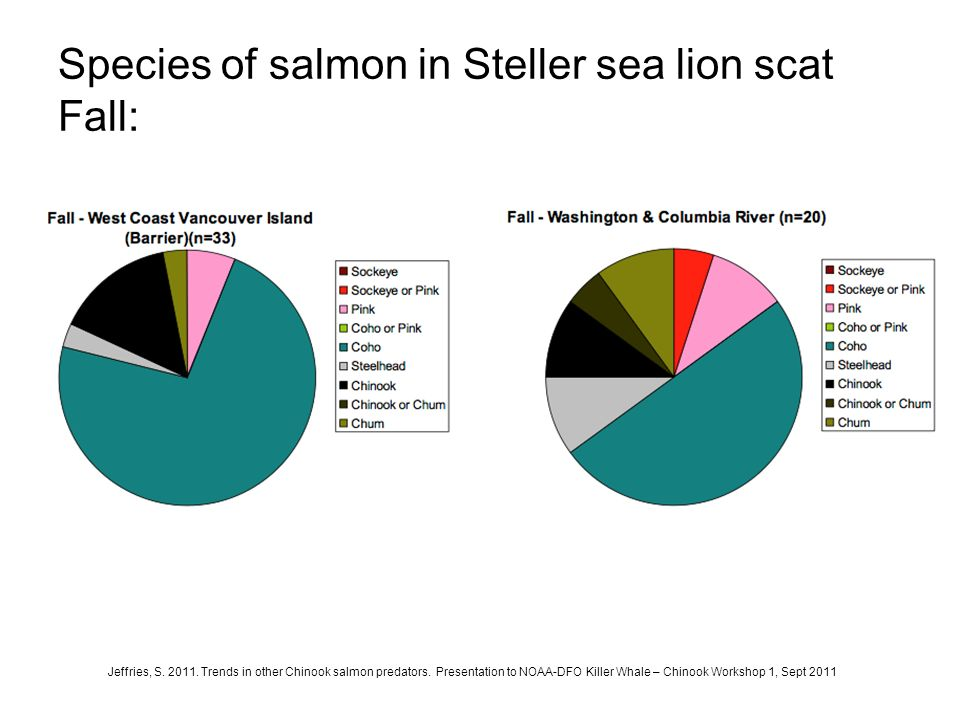 Species of salmon in Steller sea lion scat Fall: