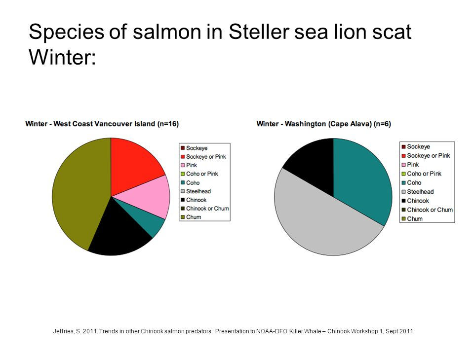 Species of salmon in Steller sea lion scat Winter: