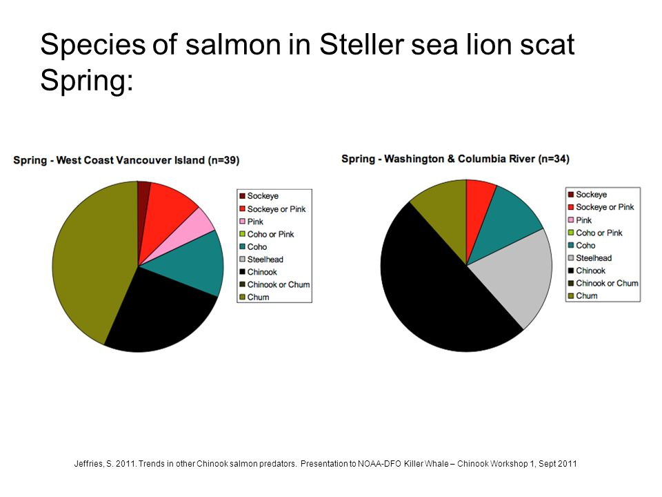 Species of salmon in Steller sea lion scat Spring: