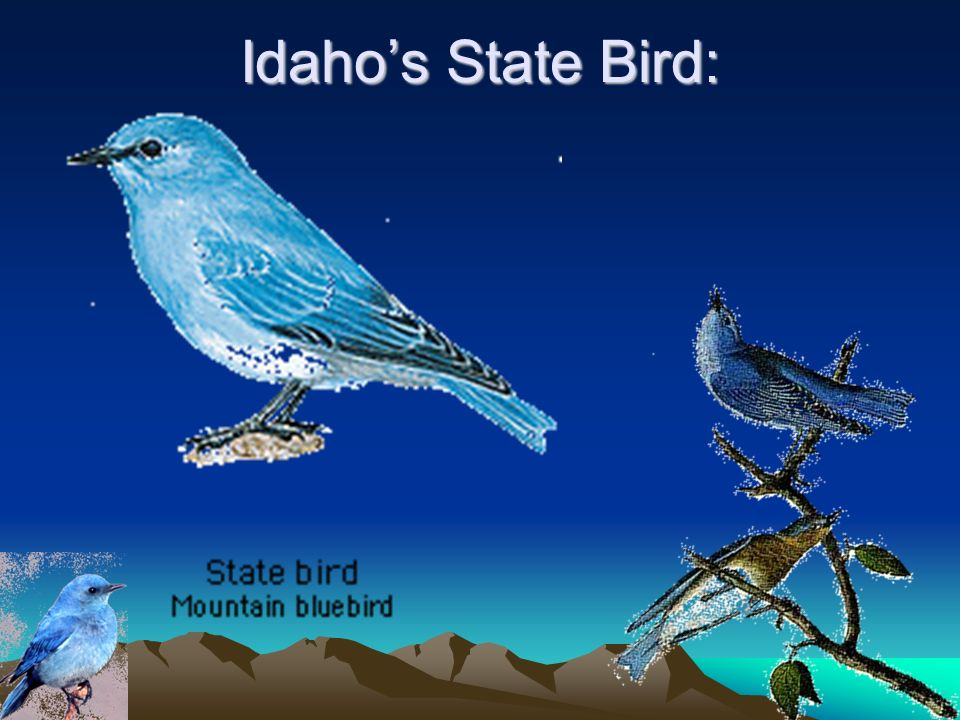 Idaho's State Bird: