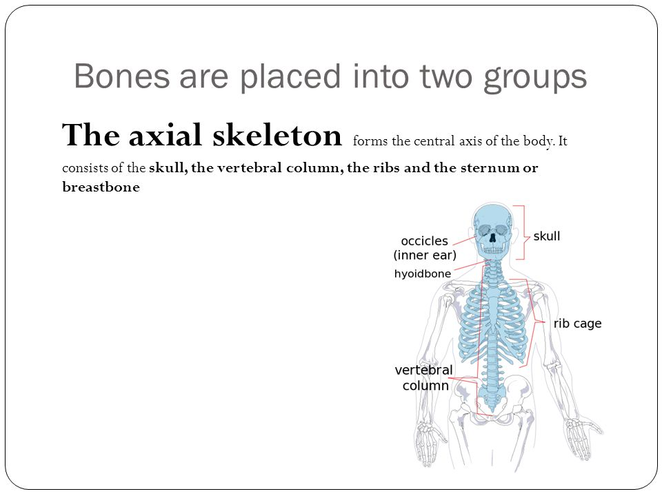 Bones are placed into two groups