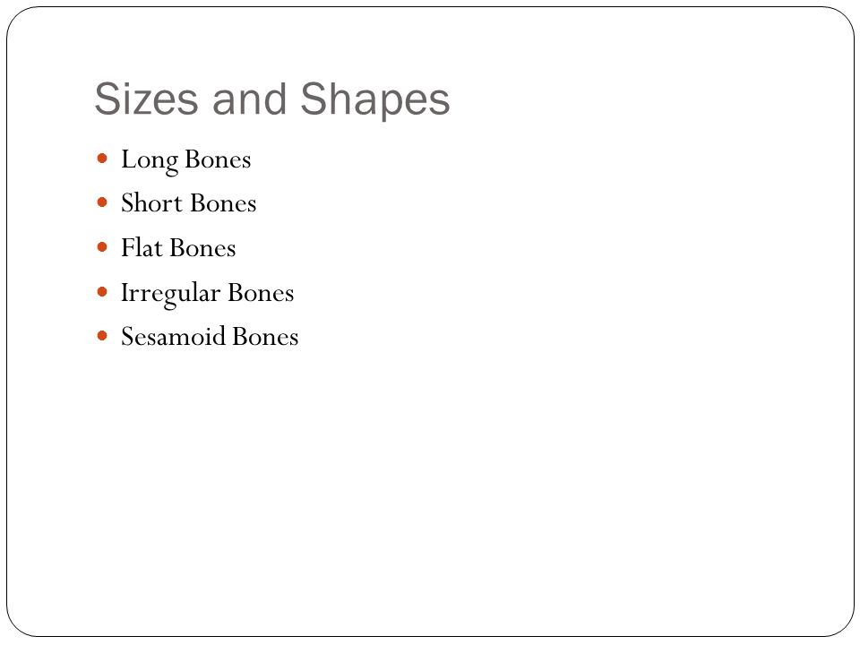 Sizes and Shapes Long Bones Short Bones Flat Bones Irregular Bones