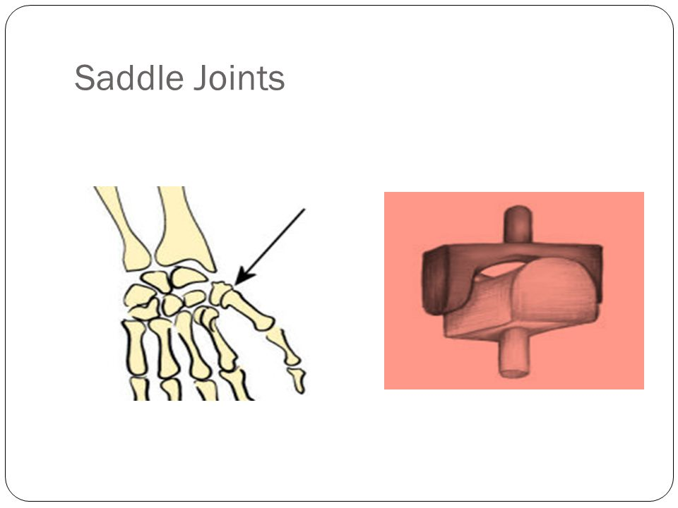 Saddle Joints Saddle joints are found in the thumb it allows for the thumb to cross over to the palm of the hand.