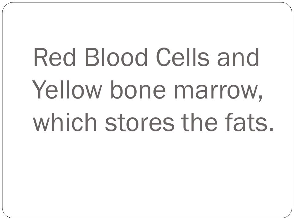 Red Blood Cells and Yellow bone marrow, which stores the fats.