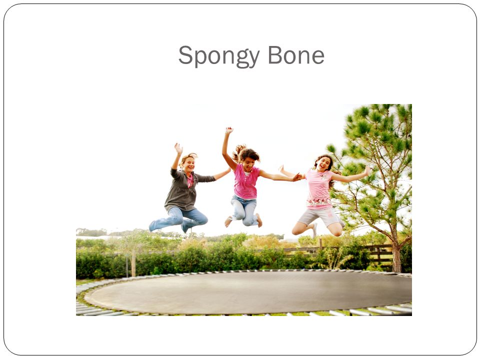Spongy Bone Spongy bone helps your body to bounce back to help prevent breaks