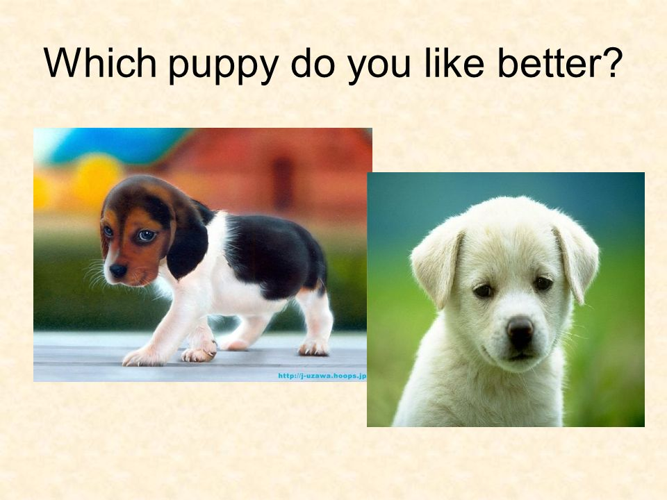 Which puppy do you like better