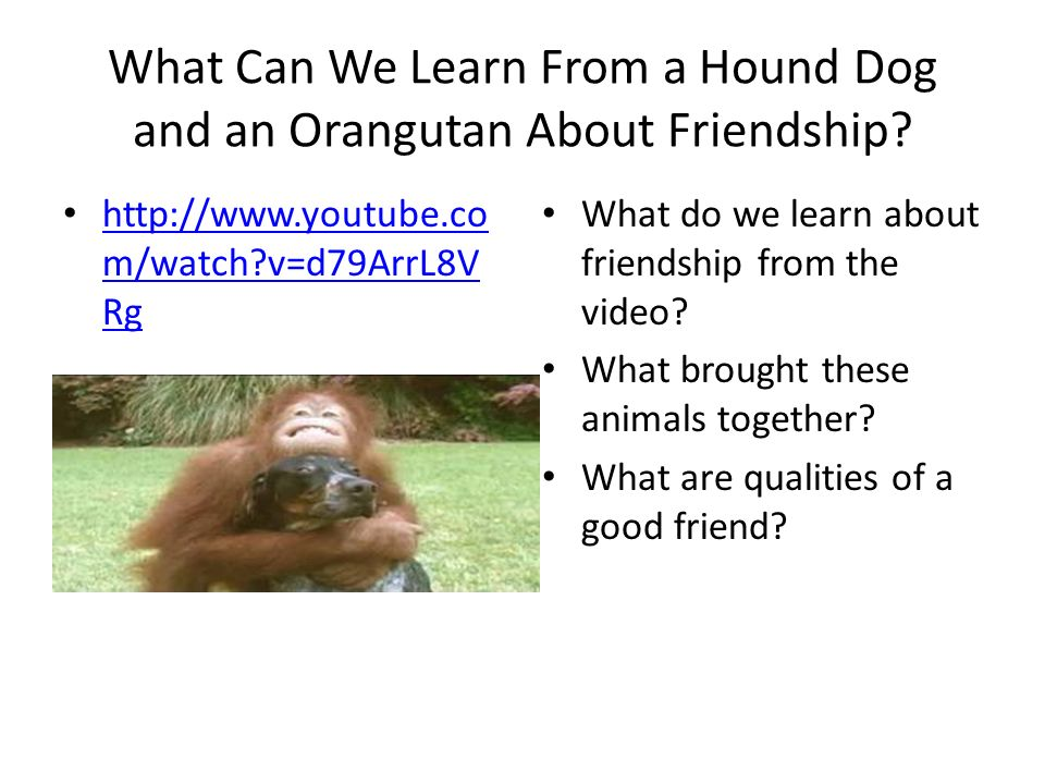 What Can We Learn From a Hound Dog and an Orangutan About Friendship