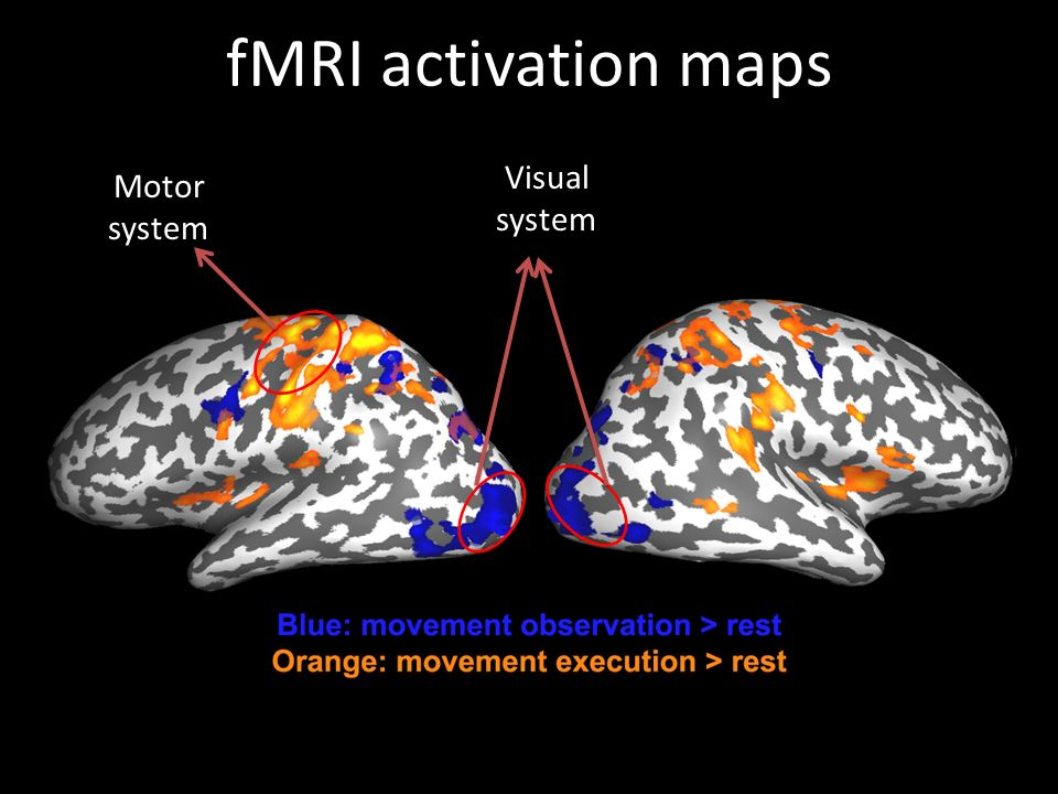 fMRI activation maps Visual system Motor system
