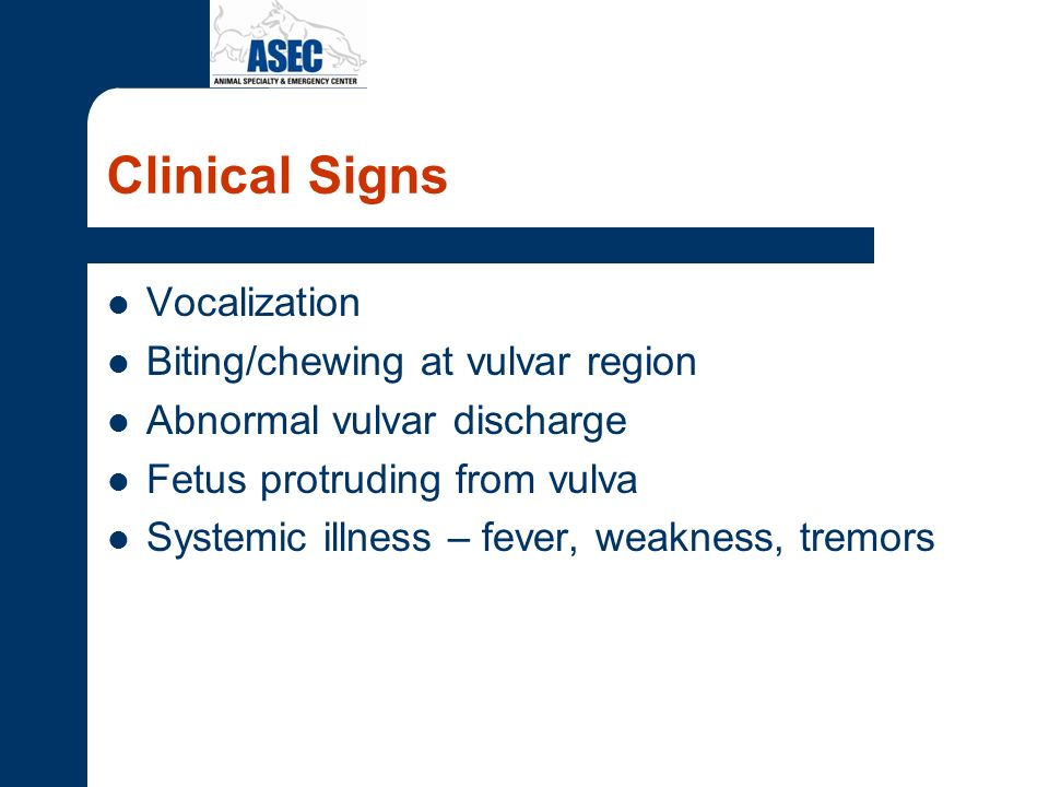 Clinical Signs Vocalization Biting/chewing at vulvar region