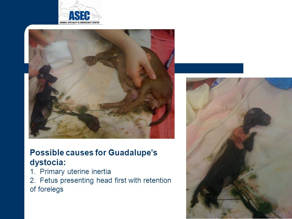 Possible causes for Guadalupe's dystocia: