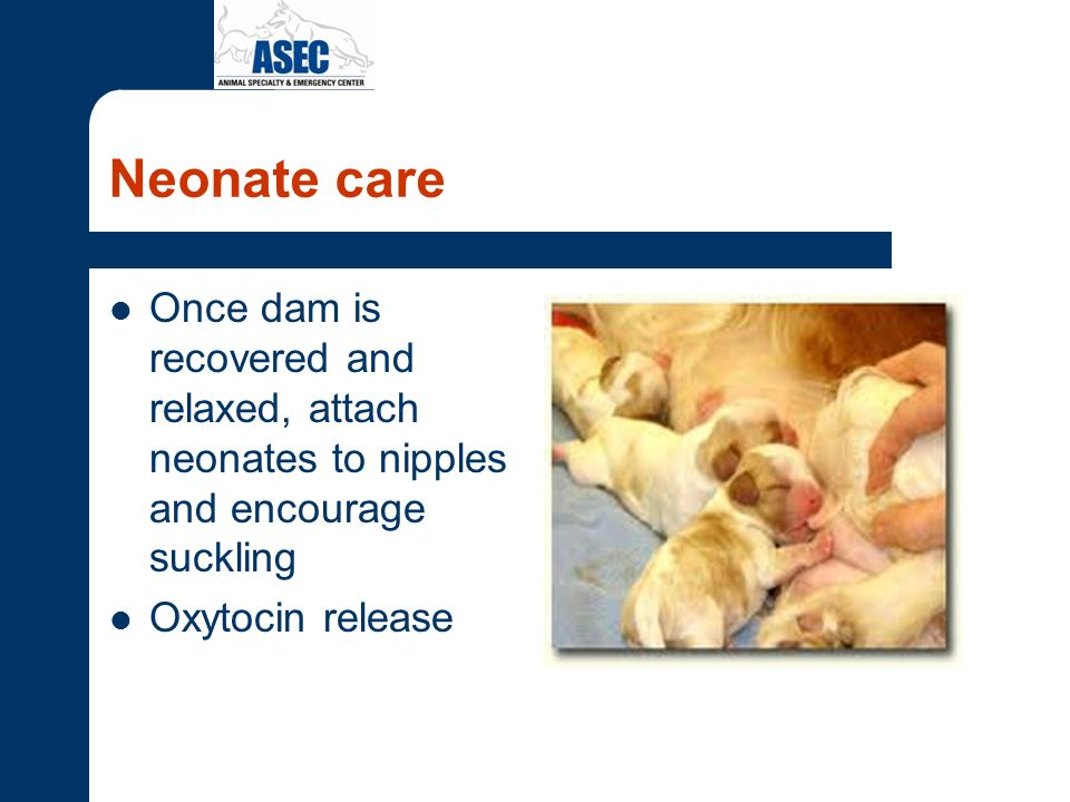 Neonate care Once dam is recovered and relaxed, attach neonates to nipples and encourage suckling.