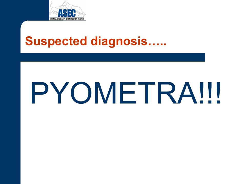 Suspected diagnosis….. PYOMETRA!!!