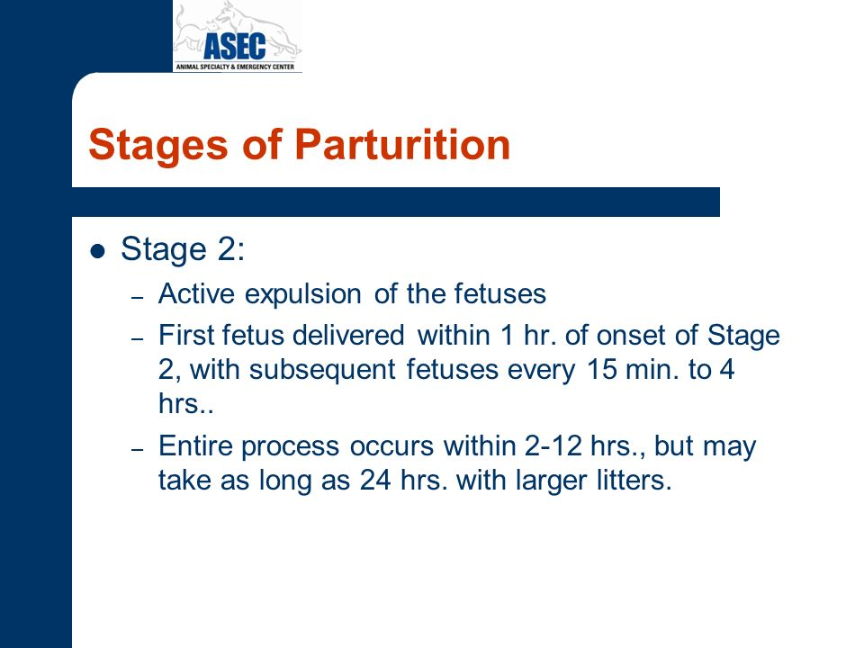 Stages of Parturition Stage 2: Active expulsion of the fetuses