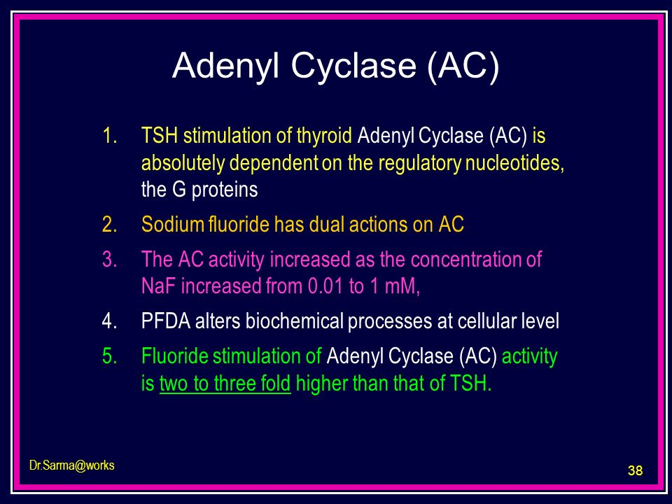 Adenyl Cyclase (AC)TSH stimulation of thyroid Adenyl Cyclase (AC) is absolutely dependent on the regulatory nucleotides, the G proteins.