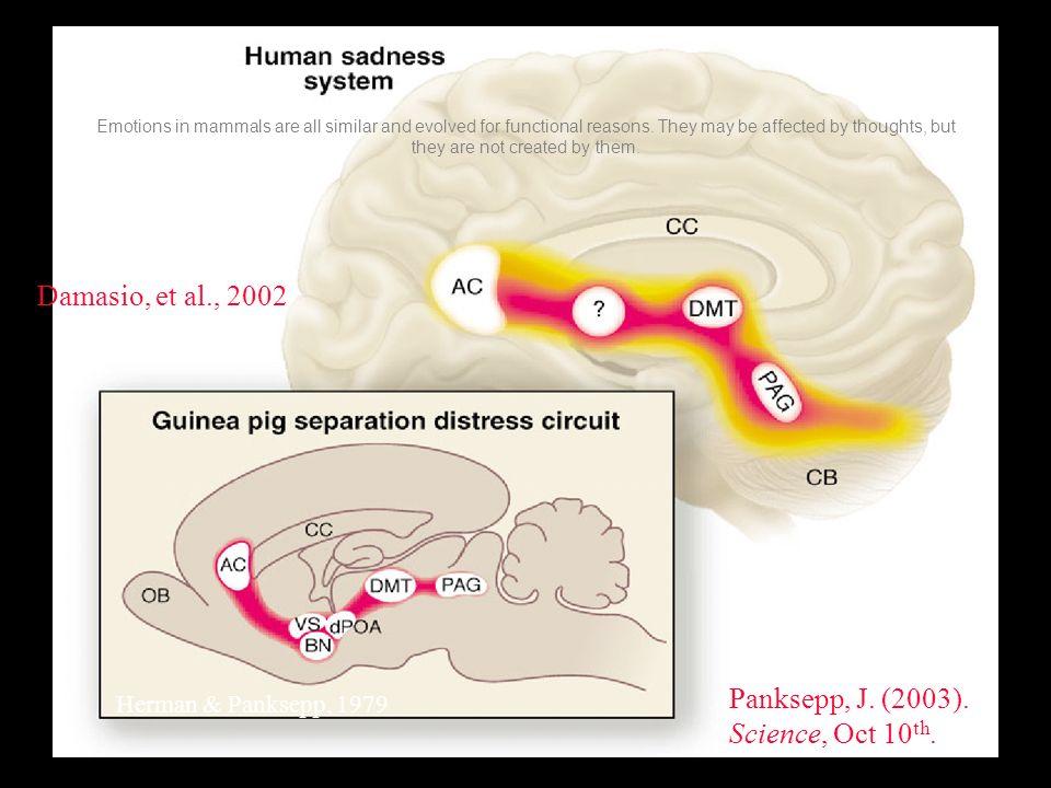Damasio, et al., 2002 Panksepp, J. (2003). Science, Oct 10th.