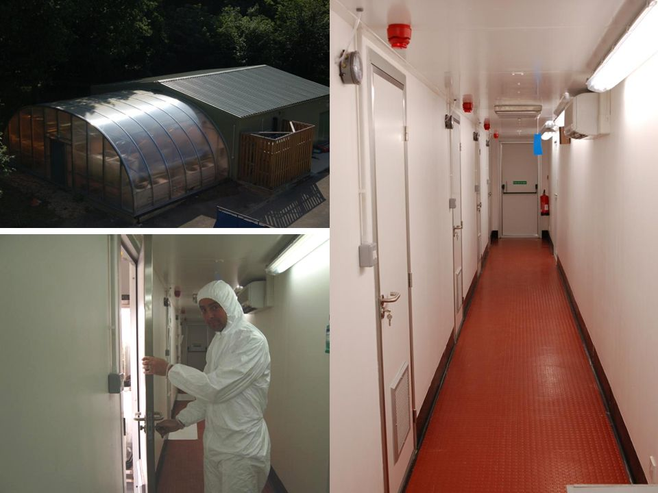 In the interests of safety, the testing work was carried out in our Defra-licensed level 3 quarantine facilities alongside field work carried out by our collaborators in Japan