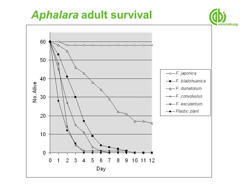 Aphalara adult survival