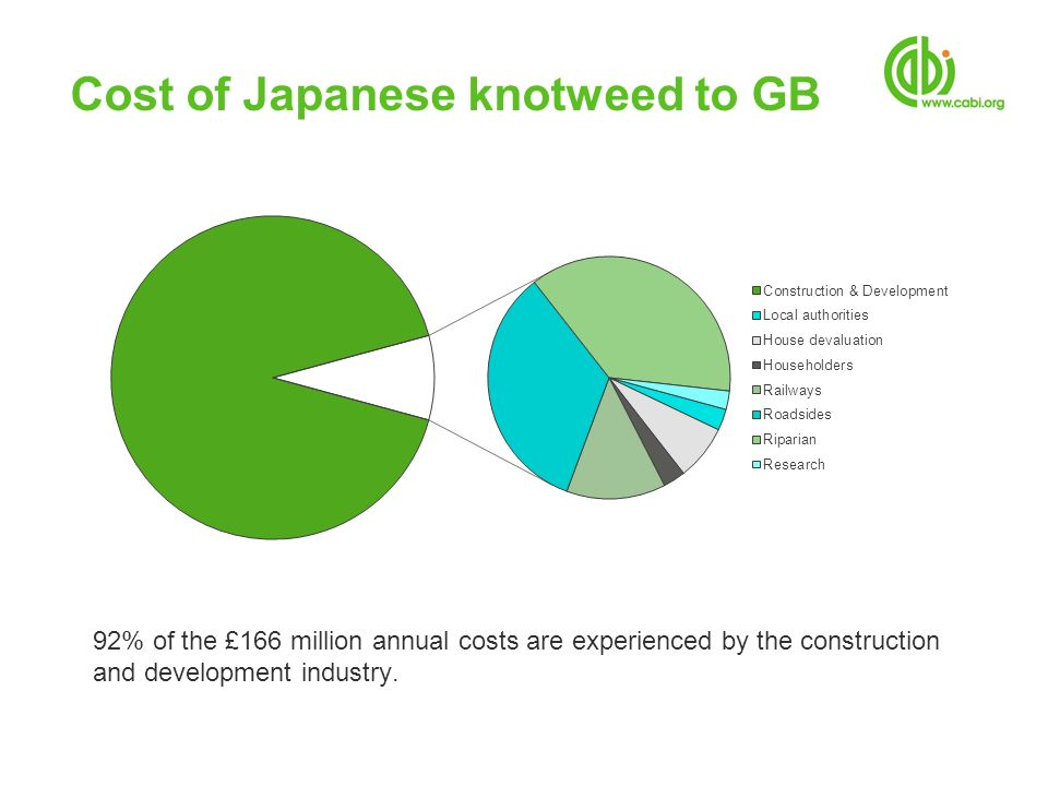 Cost of Japanese knotweed to GB