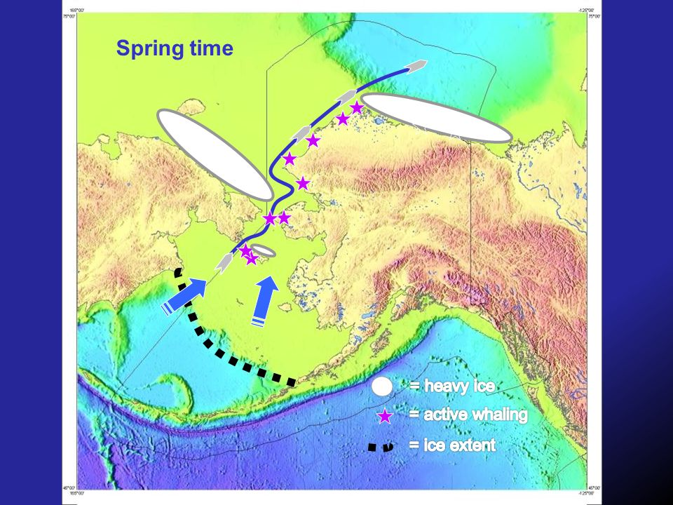 Spring time = heavy ice = active whaling = ice extent