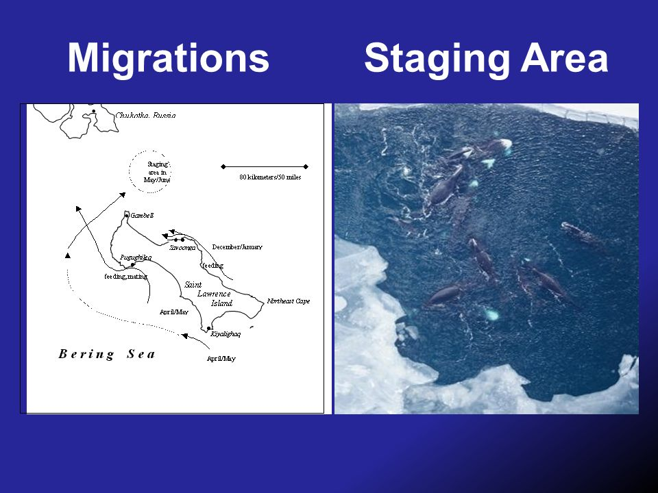 Migrations Staging Area