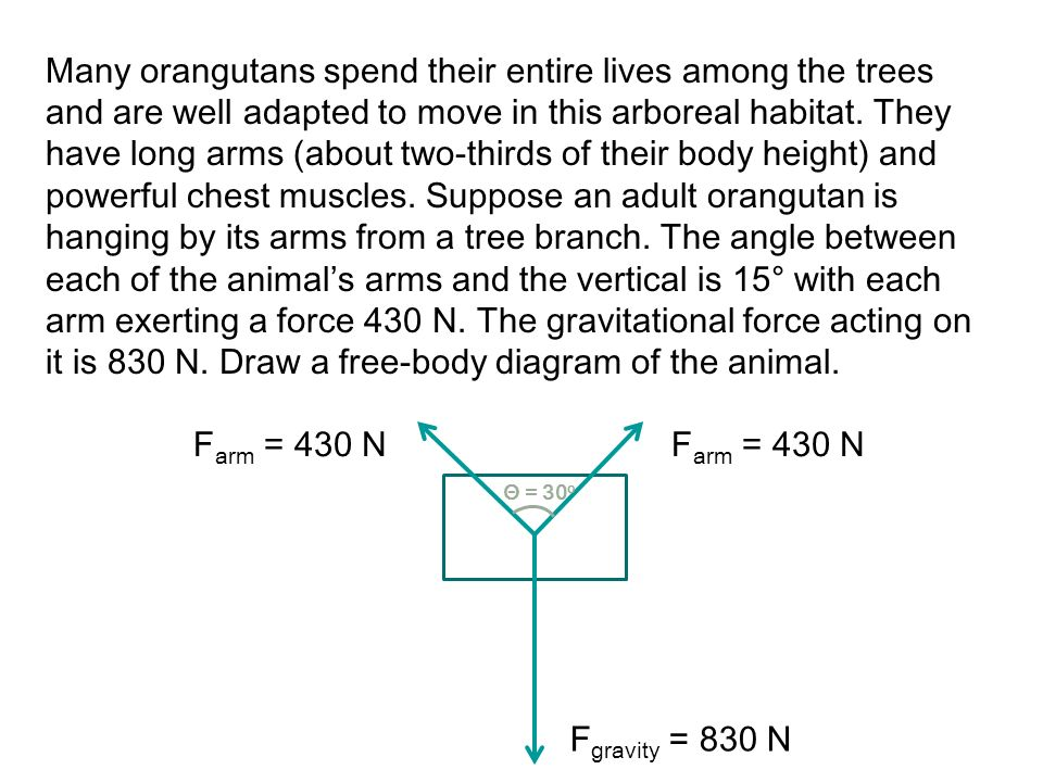 Many orangutans spend their entire lives among the trees and are well adapted to move in this arboreal habitat. They have long arms (about two-thirds of their body height) and powerful chest muscles. Suppose an adult orangutan is hanging by its arms from a tree branch. The angle between each of the animal's arms and the vertical is 15° with each arm exerting a force 430 N. The gravitational force acting on it is 830 N. Draw a free-body diagram of the animal.