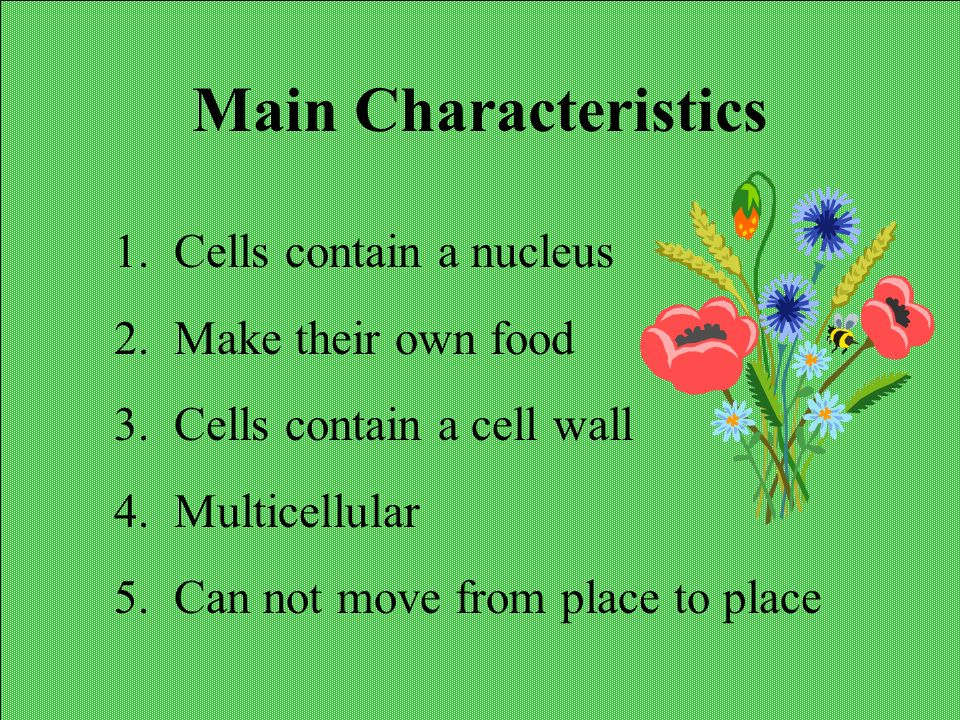 Main Characteristics Cells contain a nucleus Make their own food