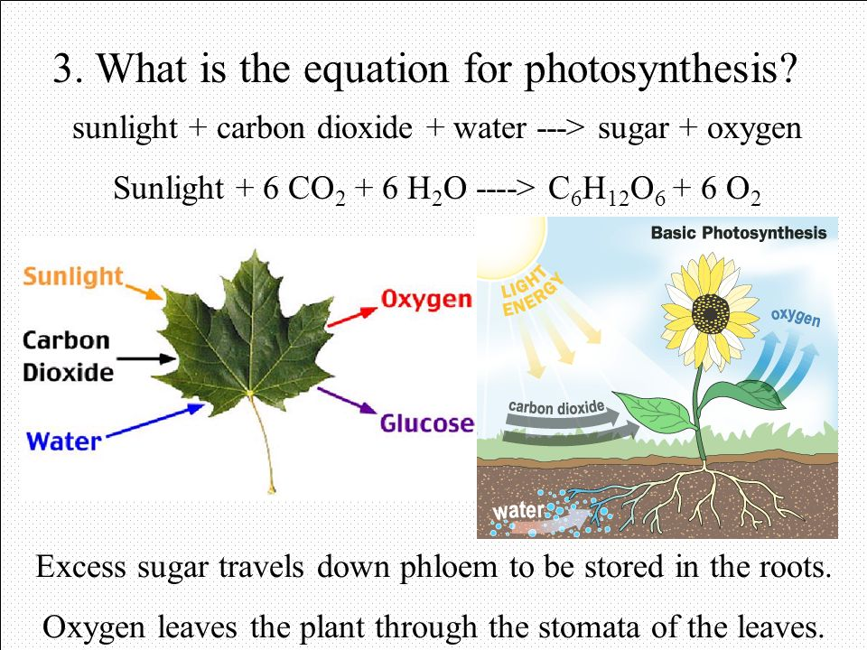 3. What is the equation for photosynthesis