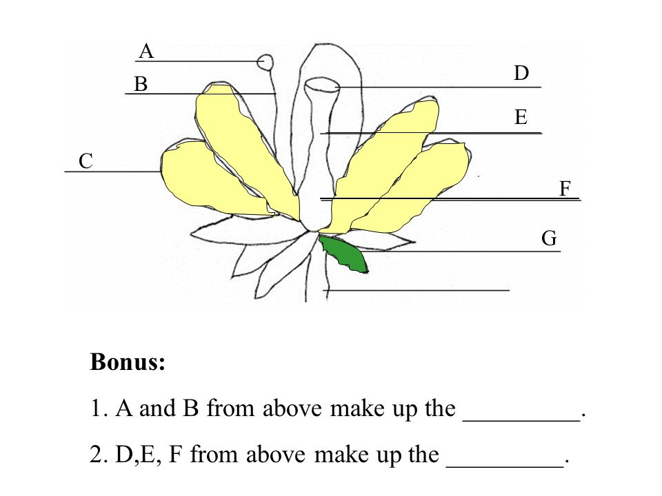 1. A and B from above make up the _________.