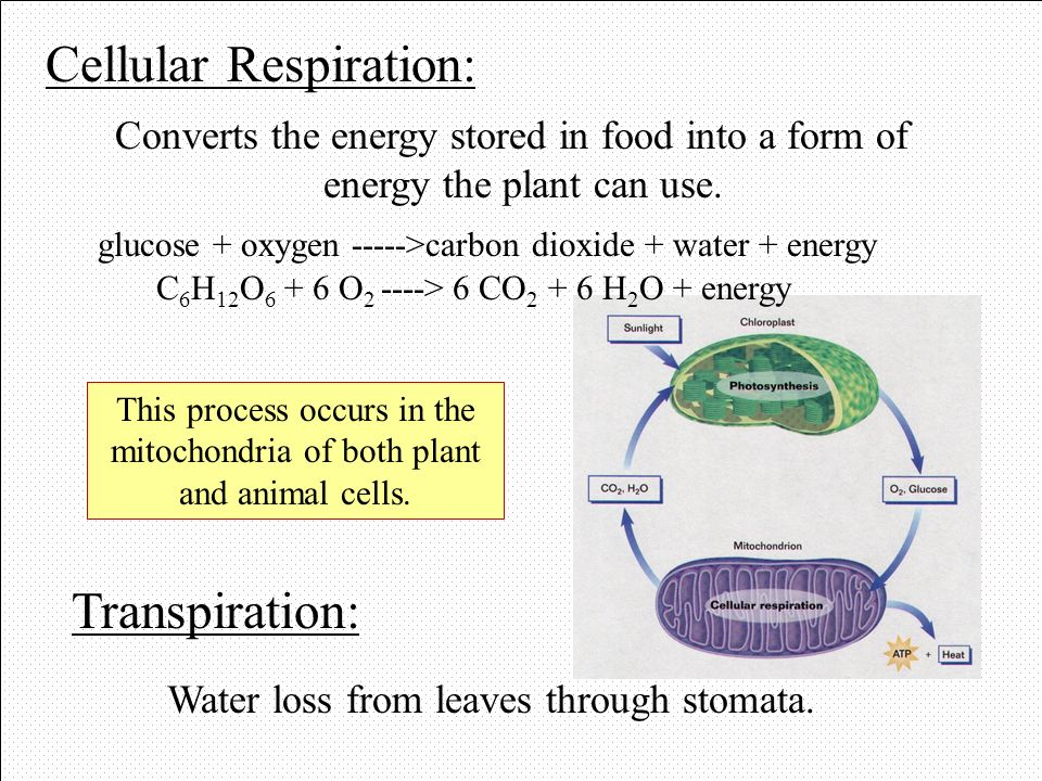 C6H12O6 + 6 O2 ----> 6 CO2 + 6 H2O + energy