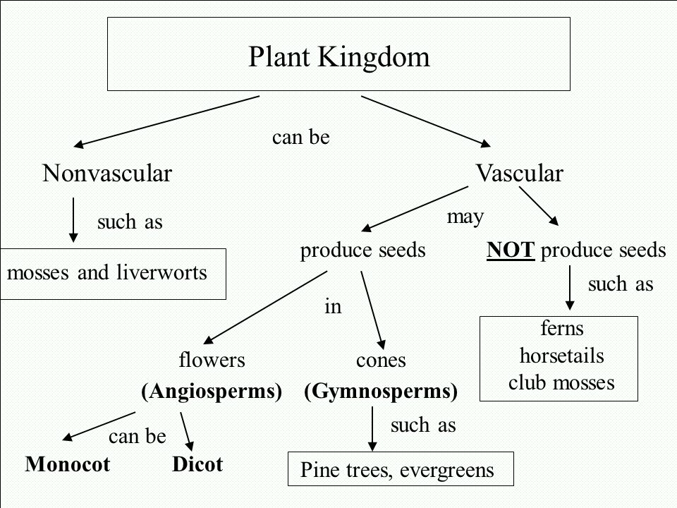 Plant Kingdom Nonvascular Vascular can be such as may in produce seeds