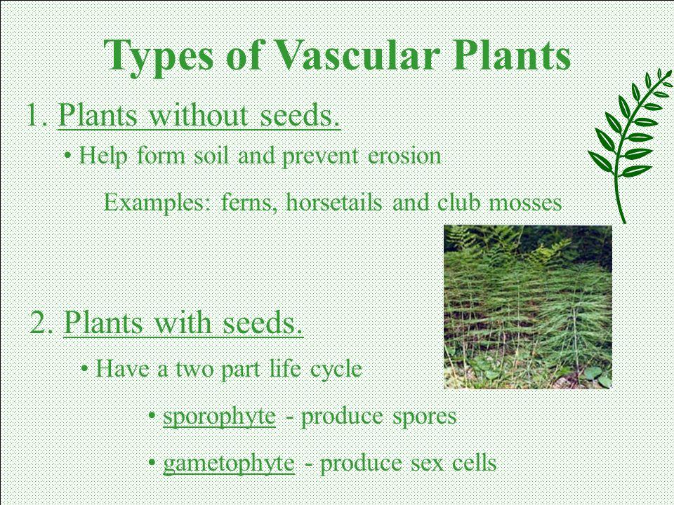 Types of Vascular Plants