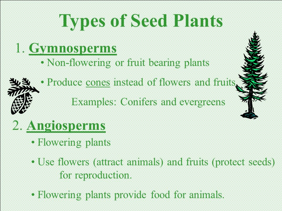 Types of Seed Plants 1. Gymnosperms 2. Angiosperms
