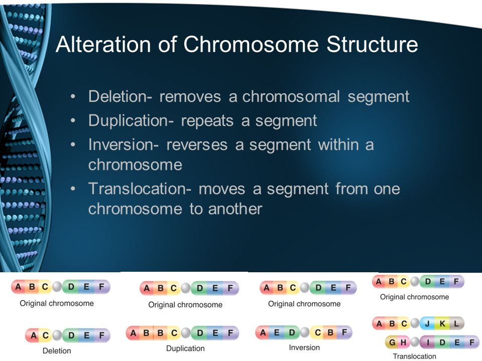 Alteration of Chromosome Structure