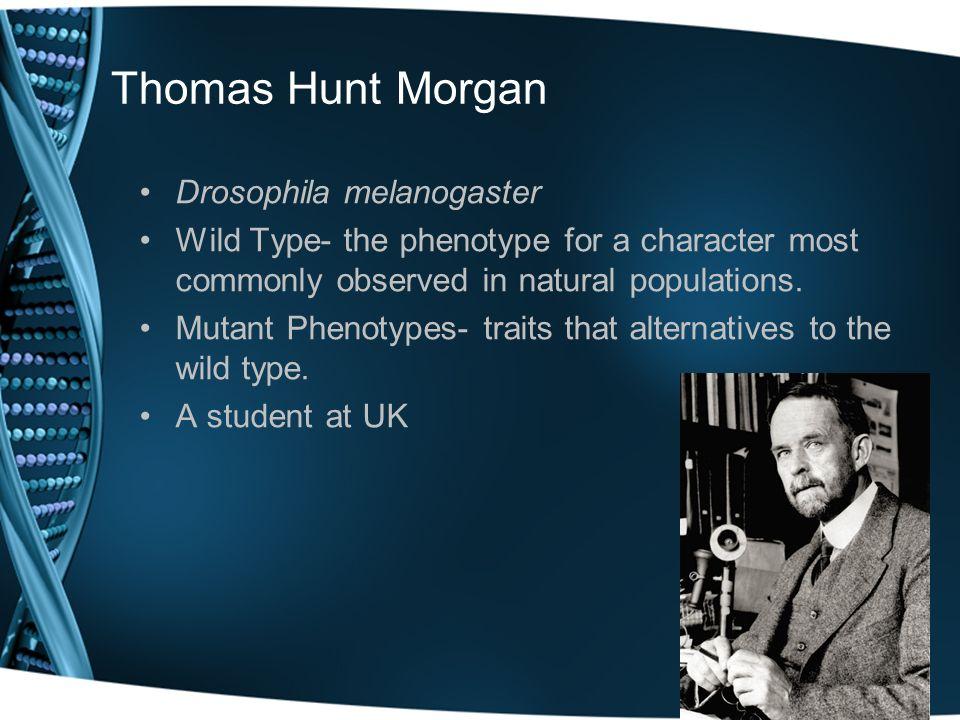 Thomas Hunt Morgan Drosophila melanogaster