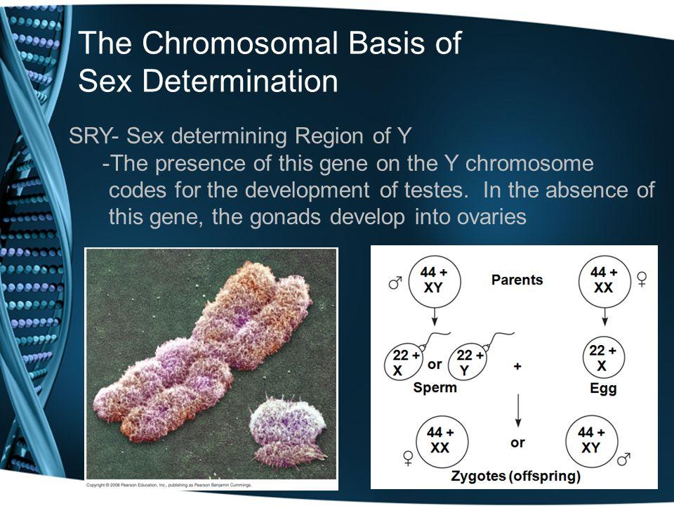 The Chromosomal Basis of Sex Determination