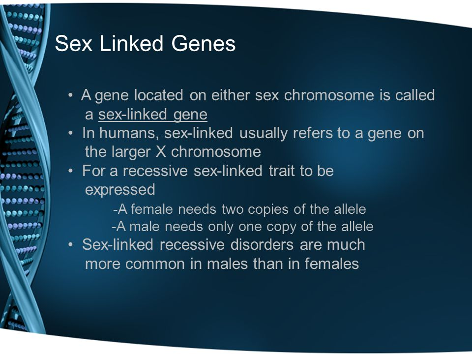 Sex Linked Genes A gene located on either sex chromosome is called