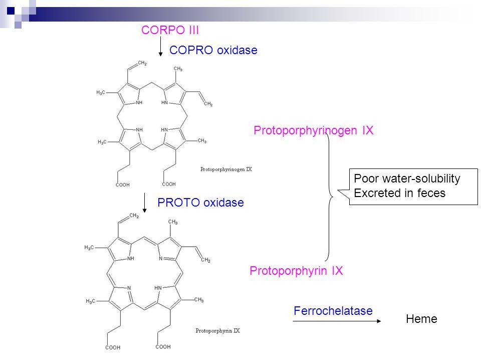 CORPO III COPRO oxidase. Protoporphyrinogen IX. Poor water-solubility. Excreted in feces. PROTO oxidase.