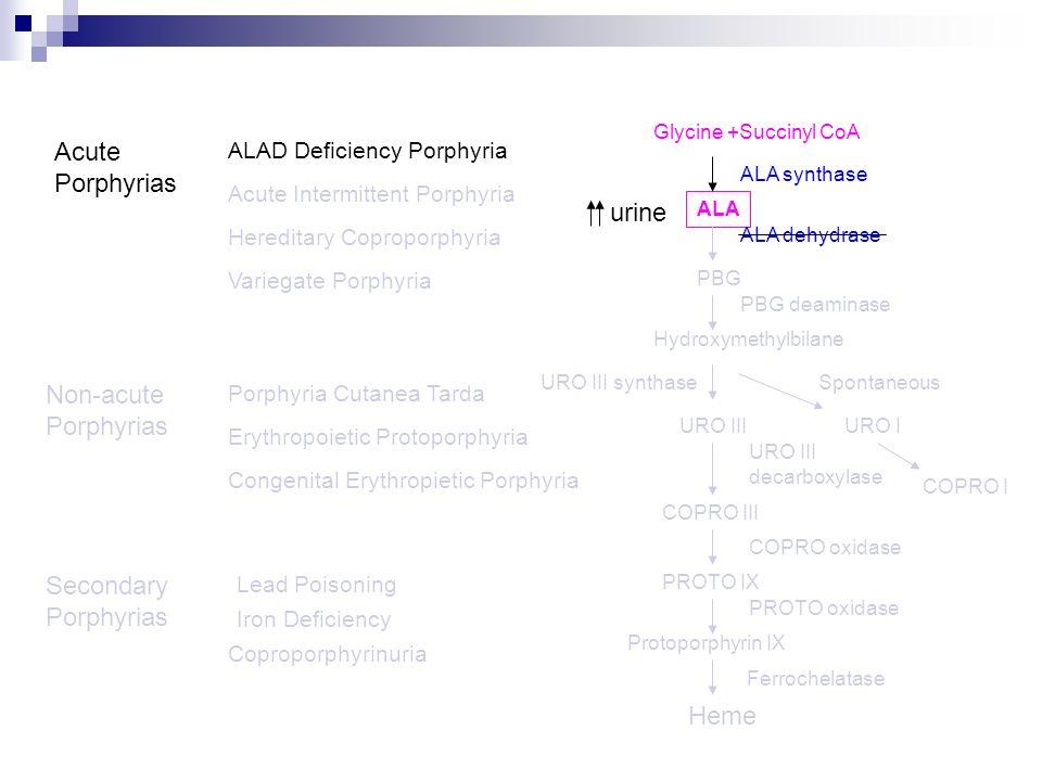 Acute Porphyrias urine Non-acute Porphyrias Secondary Porphyrias Heme