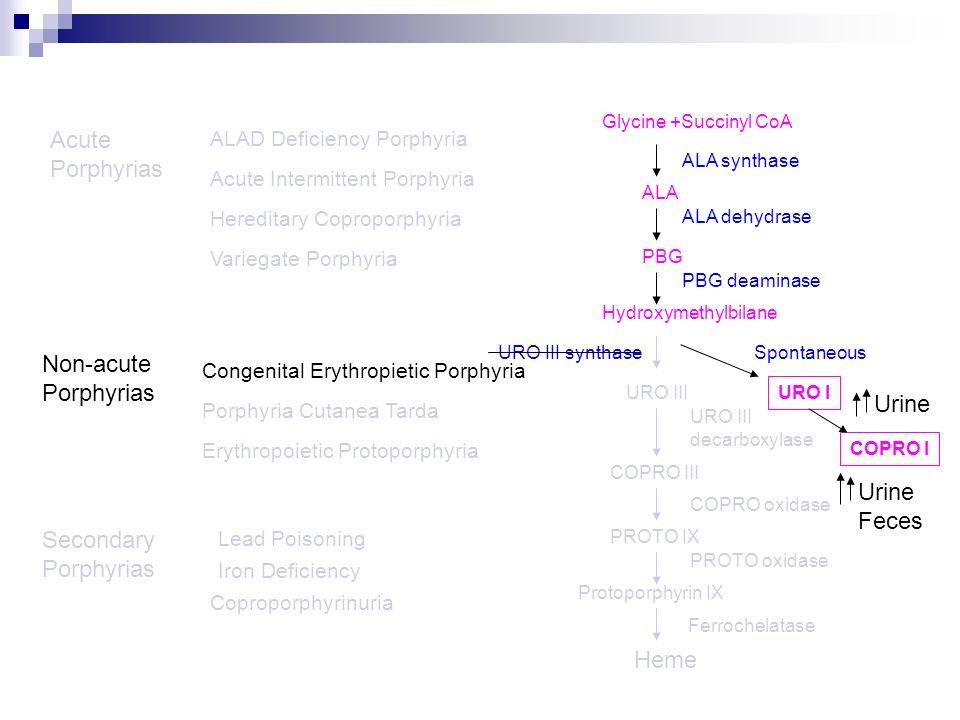 Acute Porphyrias Non-acute Porphyrias Urine Urine Feces Secondary