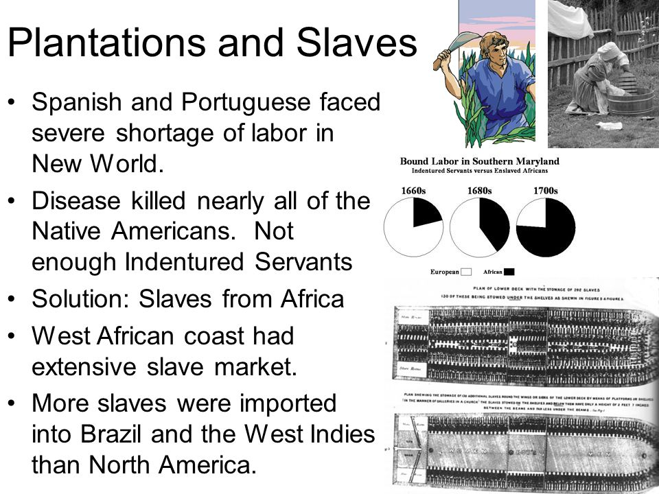Plantations and Slaves