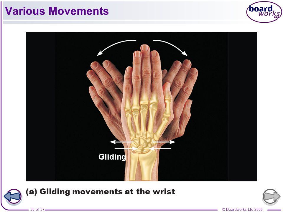 Various Movements Gliding (a) Gliding movements at the wrist