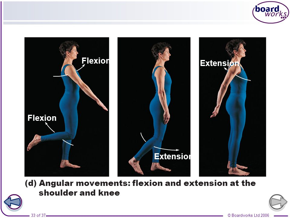 Extension Flexion (d) Angular movements: flexion and extension at the shoulder and knee