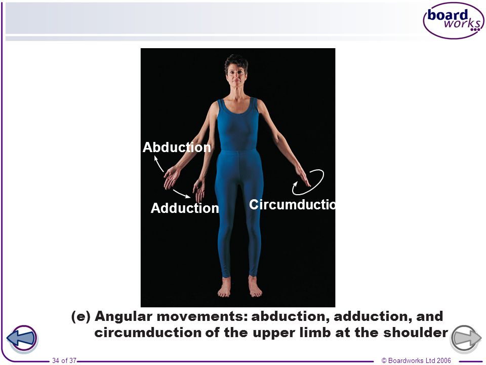 Abduction Adduction. (e) Angular movements: abduction, adduction, and circumduction of the upper limb at the shoulder.