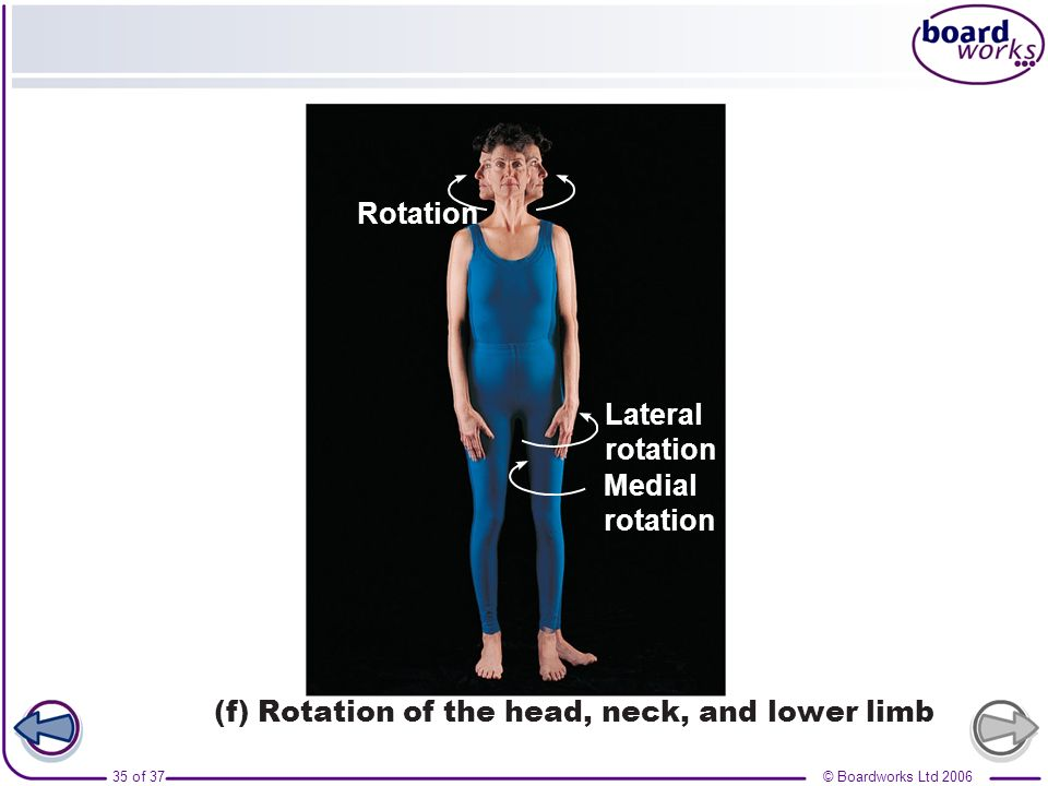 Lateral rotation Medial Rotation (f) Rotation of the head, neck, and lower limb