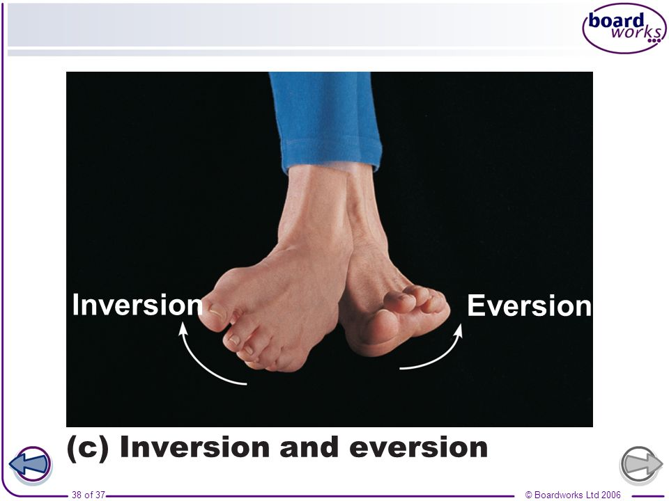 Eversion Inversion (c) Inversion and eversion