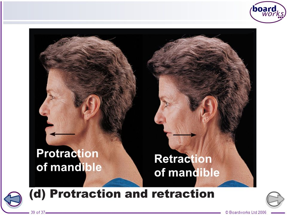 Protraction of mandible Retraction (d) Protraction and retraction