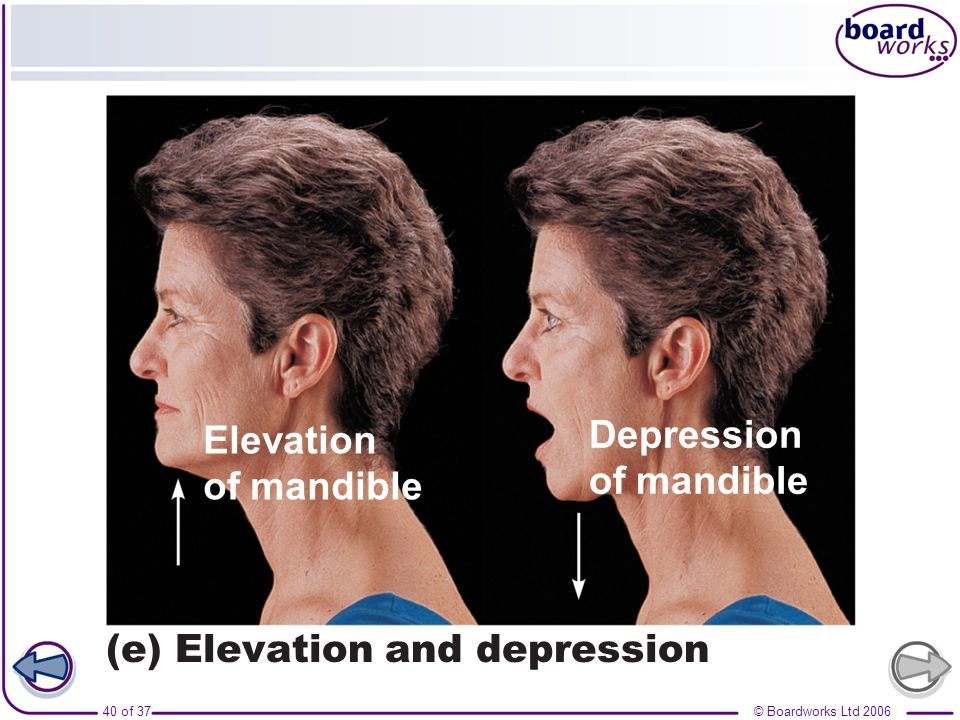 Elevation of mandible Depression (e) Elevation and depression