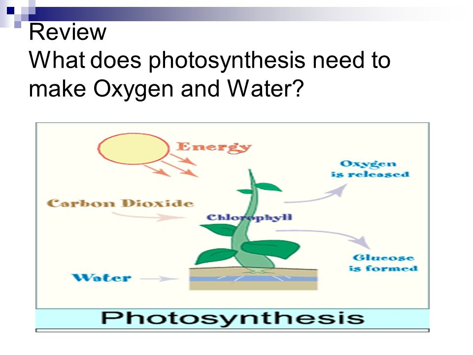 Review What does photosynthesis need to make Oxygen and Water