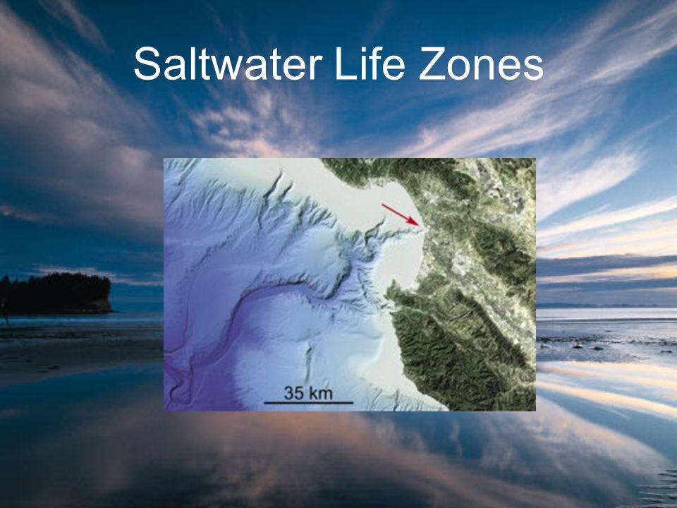 Saltwater Life Zones